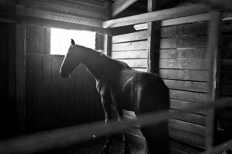 Black and White Portrait of a horse in his stall